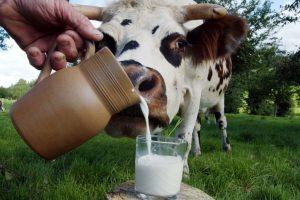 Аллергия на коровье молоко