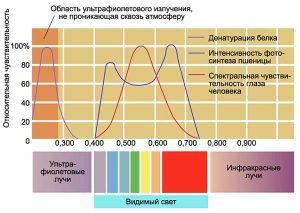 гелиобиология